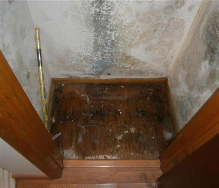 Closet mold Before